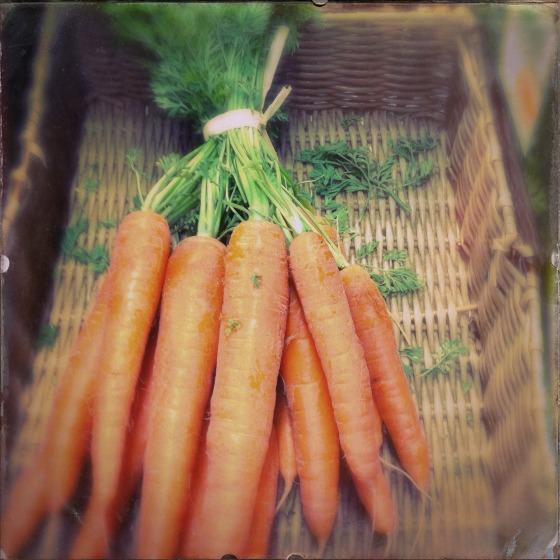 carrots-381332_1920