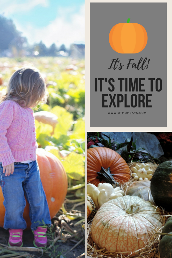 Fall explore pumpkins